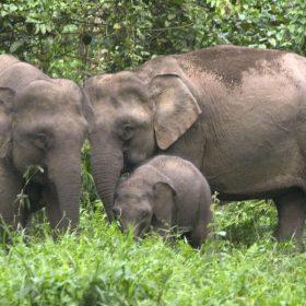 WILD ELEPHANT SAFARI