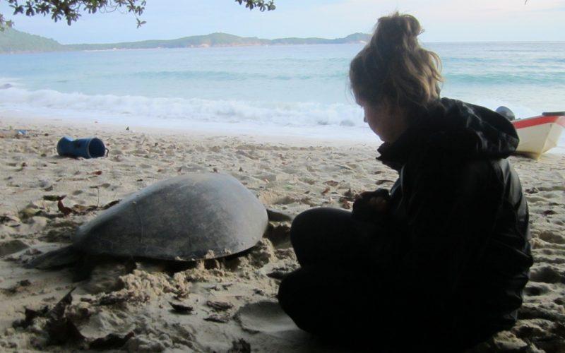 Protecting sea turtles