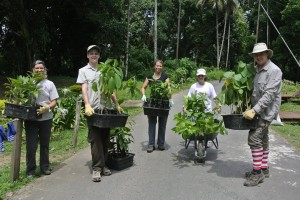 borneo wild habitat restoration