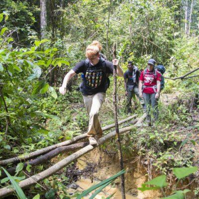 Rainforest volunteer