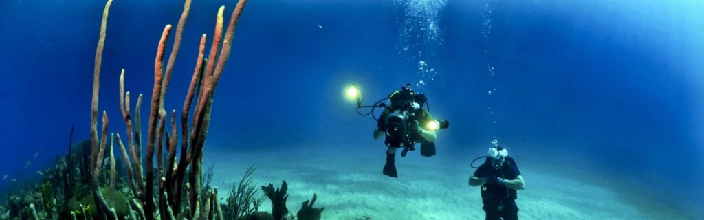 Conservation Diving Internship: Work As A Marine Researcher And Get A PADI Diving Certificate!