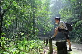 Borneo wildlife conservation internship