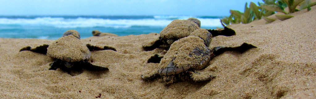 Eco Travel Guide: Being A Sea Turtle Volunteer