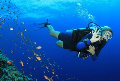 Conservation Diving Internship