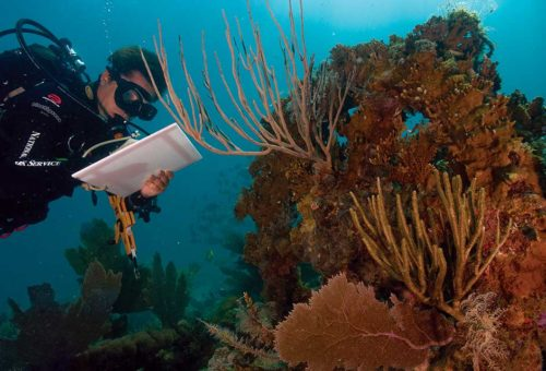 PADI Conservation Diving