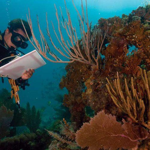 PADI Conservation Diving