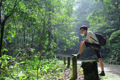 The  'Rainforest Volunteer Coordinator' Internship Is Back!