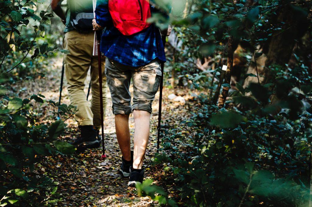 Rainforest conservation volunteering