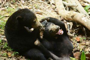 volunteer with bears