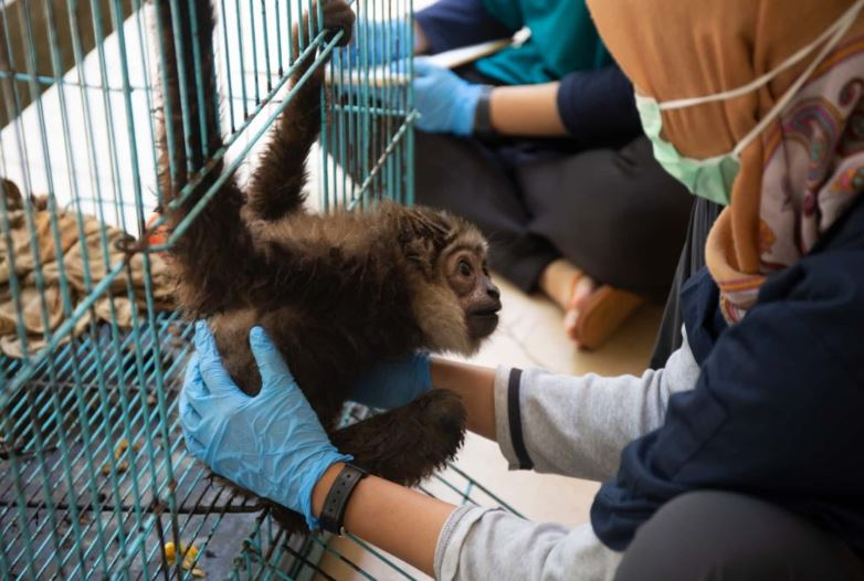 Wildlife rescue volunteering