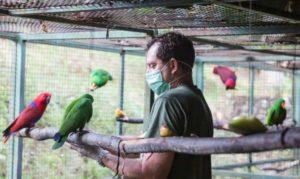 animal care volunteering