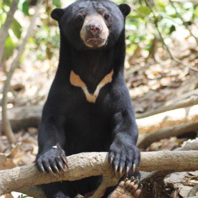 Borneo wildlife conservation project