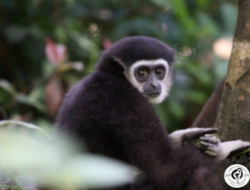 Wildlife Communication Internship
