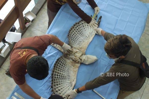 Wildlife Veterinary Internship