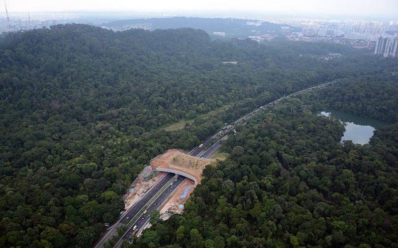 1024px-Wildlife_overpass_in_Singapore