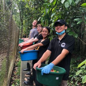 Personal Experiences Of A Sun Bear Volunteer In Sepilok, Borneo