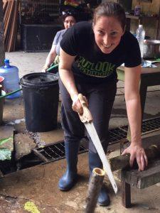 Volunteering with orangutans
