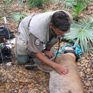 How To Become A Wildlife Vet?