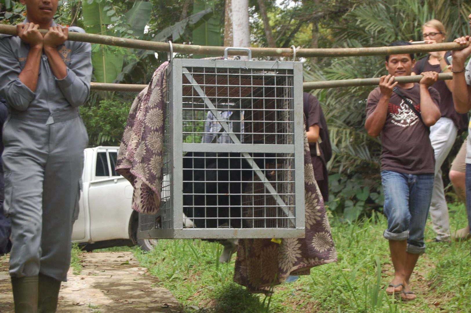 Inspiring Animal Rescue Stories From Cikananga In West Java, Indonesia