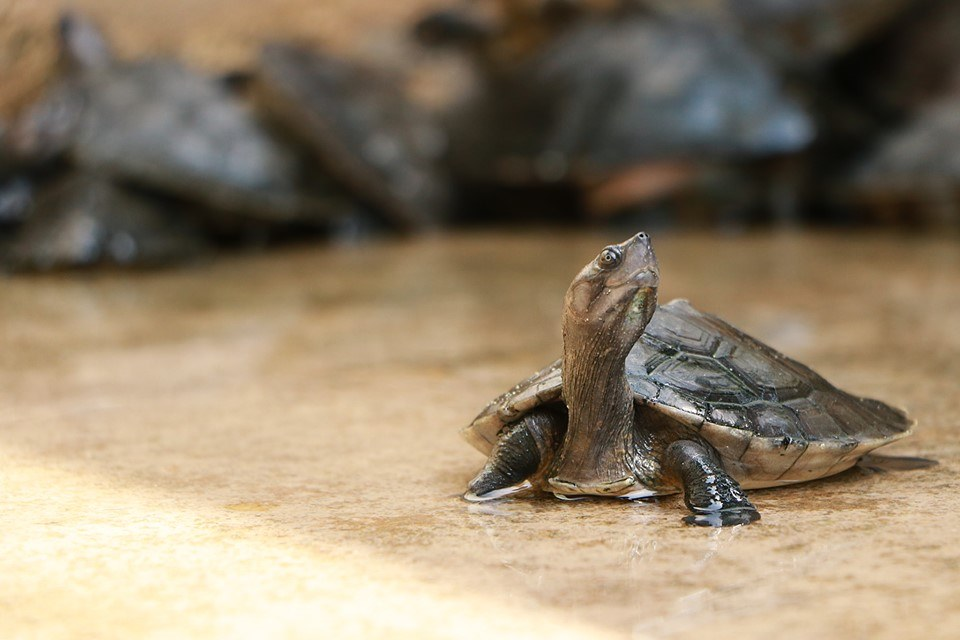 Conserving Malaysia's Turtles And Transforming Communities