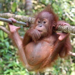 inspiring animal rescue stories