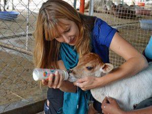 Benefits of Animal Volunteering